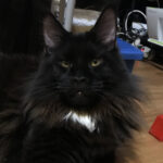 Портрет кот Джек