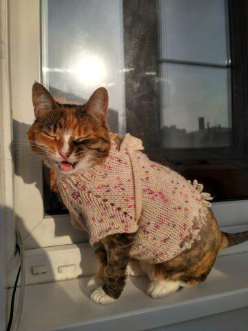 Портрет кошка Бусина