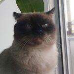 Портрет кот Семён