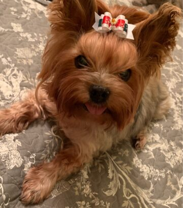 Портрет собака Миля