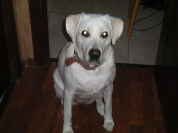 Портрет собака Молли