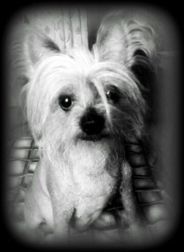 Портрет собака Дикуля