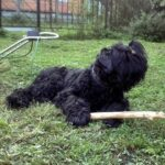 Портрет собака Ратмира