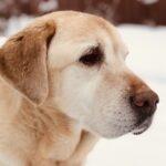 Портрет собака Лола