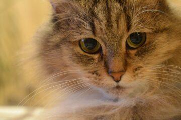 Портрет кошка Марго