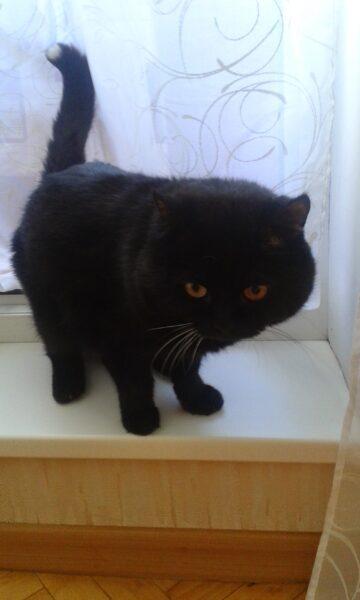 Портрет кот Марсик