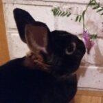 Портрет кролик Крош