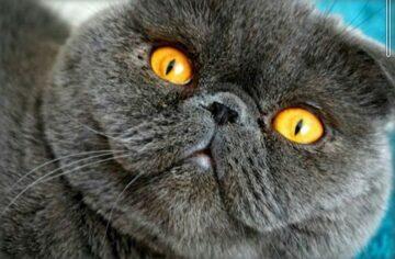 Портрет кот Плюшенька