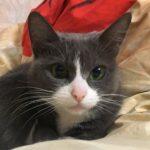 Портрет кошка Фиби