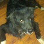 Портрет собака Гранд