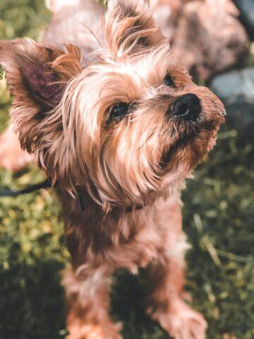 Собака Фаня