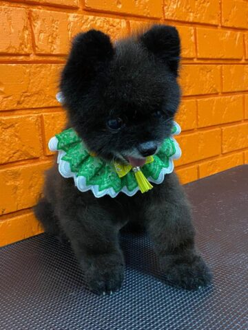 Собака Рич