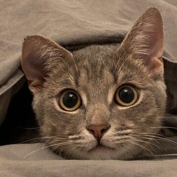 Кот Трифон