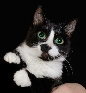 Ксюша кошка