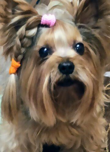 Тимоша собака