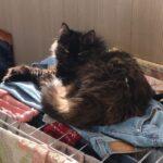 Кошка Чернушка
