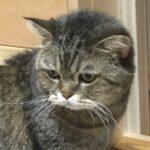 Кошка Лесси