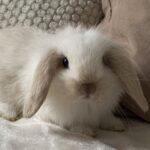 Кролик Дебби