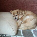 собака Фиона