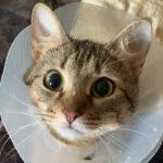 Кошка Аква