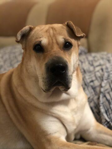 Собака Карри кладбище домашних животных