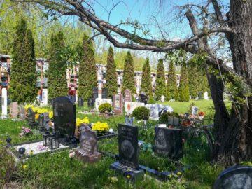 Кладбище домашних животных Москва. Фото 1.