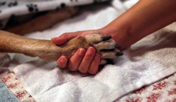 Эвтаназия домашних животных